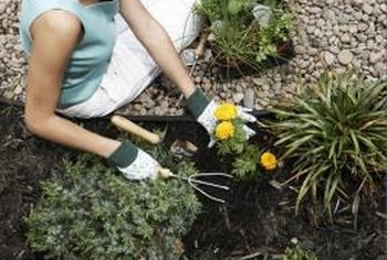 A well-prepared bed helps minimize the work on planting day.