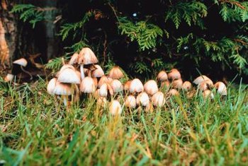 You often find mushrooms growing around fairy rings.