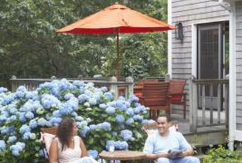 Most hydrangeas have a large, mounding growth habit.