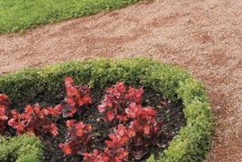 Shorter boxwoods can make a decorative border around flower beds.