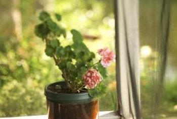 Potted geraniums add easy-care color to outside living areas.