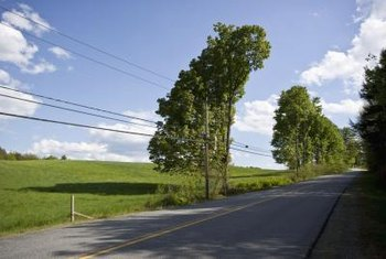 Pruning your trees could keep branches away from power lines.