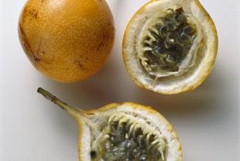 The yellow passion fruit is hardier and has a longer fruit growing season than its purple relative.