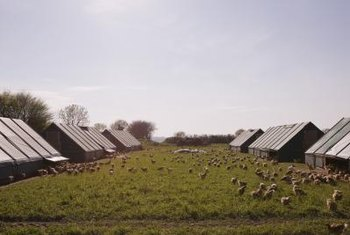 Access to pasture, sunlight and fresh air reduces the stress experienced by chickens (see References 4).