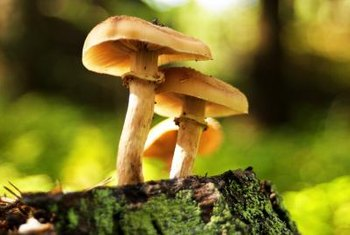 Some types of mushrooms grow on dead tree roots or decomposing wood.