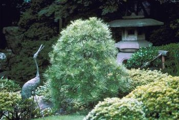 A Japanese garden uses small plants to create a natural looking scene in miniature.
