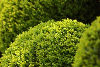 Plant a ring of shrubs to camouflage a well, while still allowing access.