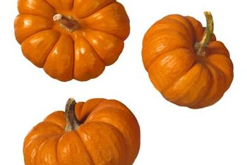 Miniature pumpkins range in color, shape and size.