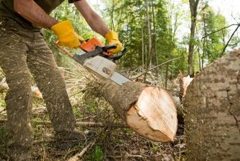 Chainsaws can be used to cut branches on the ground or on trees.