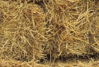 Straw bales can be used as a convenient garden planting medium.