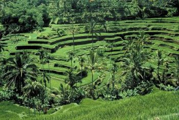 Some cultures have used terraces to transform slopes for millennia.