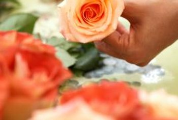 Bacteria can clog the stems of cut roses and prevent them from taking up water.