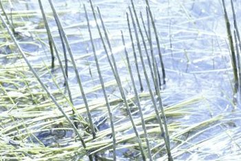 Aquatic weed control is often a daunting prospect.