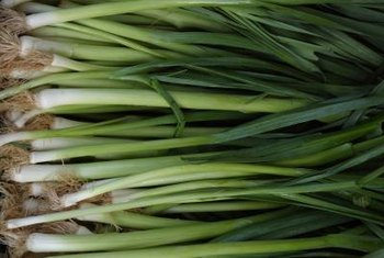 The scallion has a more subtle flavor than its adult form, the onion.