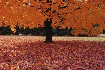 Fallen leaves break down into nutrients for the soil.