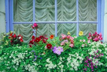 A combination of colors, shapes and sizes creates an interesting window box.