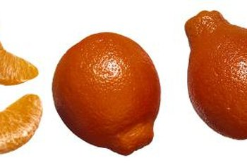 """Minneola"" tangelos are a hybrid between a grapefruit and a mandarin orange."