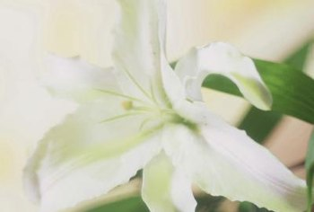 Lilies are relatively hardy and grow well in crates.