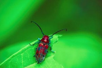 Red bugs don't only live near the ground; many like tree leaves.