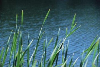 Aerators can help a pond ecosystem by adding oxygen to the environment.