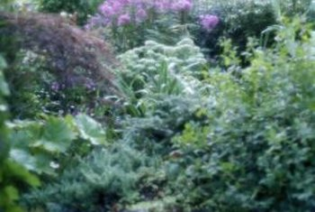 Plant shrubs in the fall at the beginning of the rainy season.