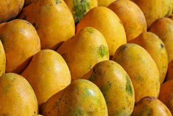 Manila mangoes have the thinnest seeds of any mango..
