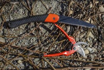 Use a small saw for thicker branches the pruning shears can't cut through.