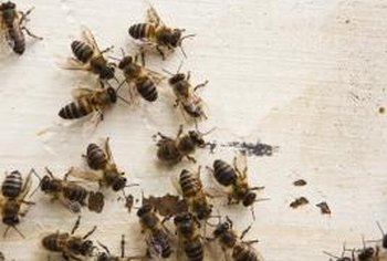 Caulking cracks and holes can keep honeybees out of your home.