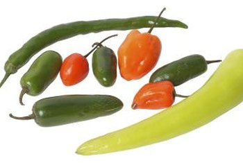 Several different peppers are used for chile rellenos, depending on how hot you want the dish.