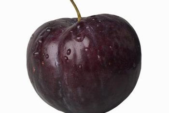 Plums have hard pits that take time to crack and sprout.