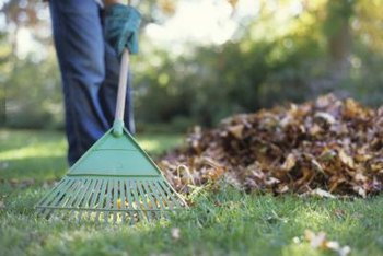 Raking your lawn just before winter helps keep your grass from being smothered.