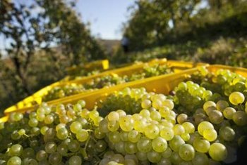 Grape production benefits the wine, juice, raisin and jam industries.