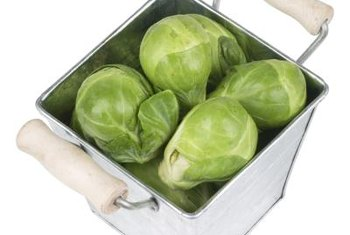 Brussel sprouts are a cool-weather crop planted for harvest in winter.