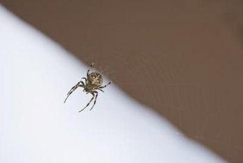 Spider webs are unsightly when they are located on ceilings and in corners of the house.