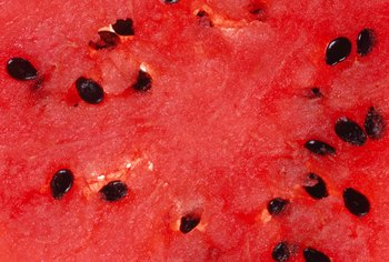 Each black watermelon seed is capable of producing an entire new plant.