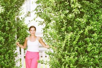 Shrubbery keeps your landscape natural and private, but it can grow out of control.