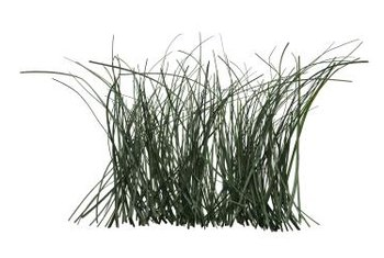 Natural grasses are an alternative to traditional lawns because of reduced maintenance.