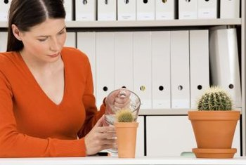 Proper watering is important to healthy cacti.