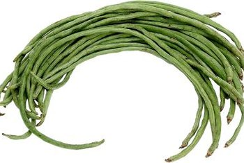 Haricot verts produce long, thin, tender pods.