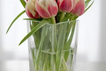 Select healthy cut tulips with no signs of wilt to ensure a longer vase life.