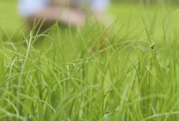 Nitrogen helps your grass develop a deep green color.