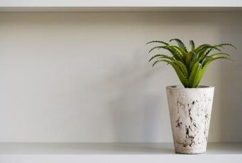 Some easy-care plants can survive with little light.