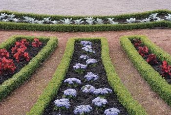 Use low hedges as borders in a formal flower garden.