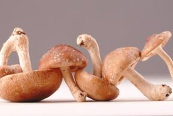 AHCC comes from mushroom extracts.