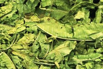 Dried and crushed lemon verbena leaves can be used to make tea.