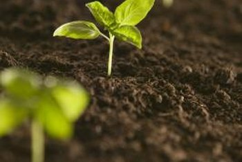 The soil's pH level affects the health of the plants.