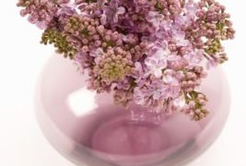 Lilacs flower in shades of pink, lavender, blue or white.
