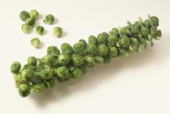 You can harvest individual sprouts, the small leaves of the plant, as well as the full stalk.