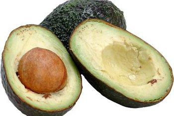 """Bacon"" avocado fruit has pale flesh with a high oil content."