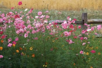 Choose one color or a varied palette when planting flowers along your fence.
